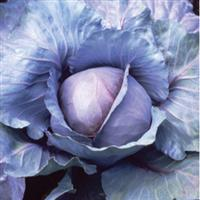 Cabbage, Red Acre