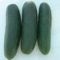 Cucumber, Marketmore
