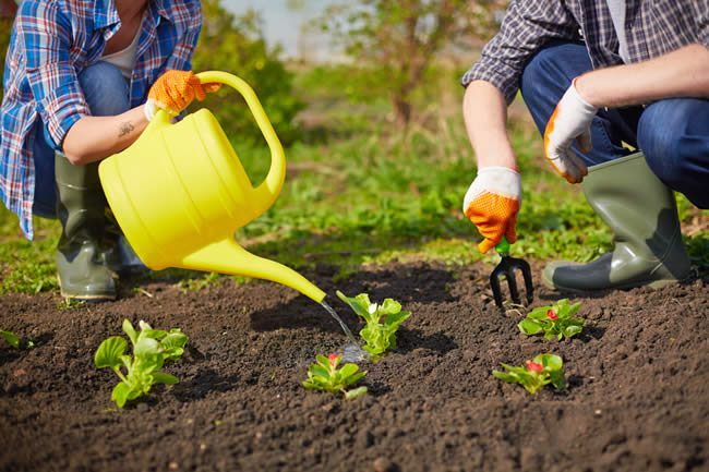 Tips on watering your vegetable garden by Schwartz Greenhouse, Metro Detroit